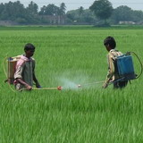 India Agrochemical Industry Reviewed in New IS Advisors Report Published at MarketPublishers.com