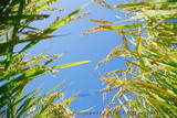 China Bio-pesticide Industry Analyzed in New CCM Chemicals Report Now Available at MarketPublishers.com