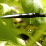 World Micro Irrigation System Market Review Most Recently Published at MarketPublishers.com