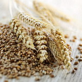 New Global Grain Mill Products Market Report Package Recently Published at MarketPublishers.com
