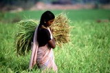 India Agriculture Sector Reviewed & Forecast in New IMARC Group Report Published at MarketPublishers.com