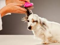US Pet Supplies & Products Examined in New Packaged Facts Study Published at MarketPublishers.com