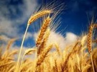 Updated In-Demand Agriculture Market Research Reports by BAC Now Available at MarketPublishers.com