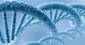 DNA Microarray Market Analyzed by Biopharm Reports in Topical Research Report Published at MarketPublishers.com