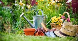 World Gardening & Outdoor Living Market Examined by MarketLine in In-demand Report Published at MarketPublishers.com