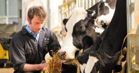 Dairy Herd Management Market Investigated & Forecast in M&M Cutting-Edge Report Published at MarketPublishers.com