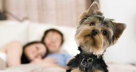 Global Pet Insurance Market Examined in Cutting-Edge Daedal Research Report Now Available at MarketPublishers.com