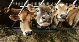 China Animal Feed Sector Opportunities Discussed by TechSci Research in New Report Now Available at MarketPublishers.com
