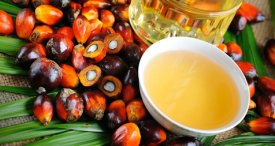 Indonesia Palm Oil Market Scenario Discussed in New Research Report by SRI Now Available at MarketPublishers.com