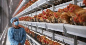 World Poultry-Keeping Machine Market Analysed by Global Research & Data Services in Report Package Available at MarketPublishers.com