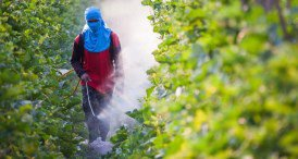 Worldwide Glyphosate Industry Prospects Reviewed in In-demand CCM Chemicals Report Published at MarketPublishers.com