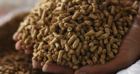 Animal Feed Probiotics Market Analysed by M&M in Topical Market Research Report Published at MarketPublishers.com