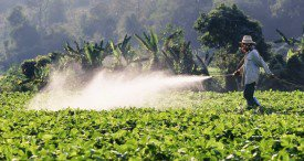 Chinese Glyphosate Sector Observed in Topical CCM Chemicals Monthly Report Available at MarketPublishers.com
