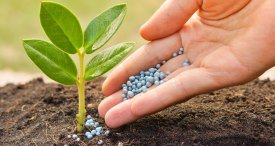 Iran Fertilizers Market Analysed & Forecast in New TechSci Research Report Recently Published at MarketPublishers.com
