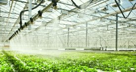 Global Greenhouse Irrigation System Market Examined in INTELLIROI Report Available at MarketPublishers.com