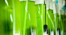 Global Nanocellulose Marketplace Analysed in New Future Markets Report Available at MarketPublishers.com