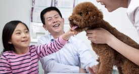 China Animal Health Product Market Analysed & Forecast by RFC in Its Research Report Recently Published at MarketPublishers.com