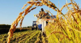 Advanced Farming Market to Record a 13.44% CAGR through 2022, States Infoholic Research in Its Latest Report Now Available at MarketPublishers.com
