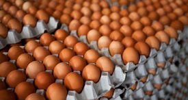 Chinese Poultry Eggs Market Is on the Rise, According to Cutting-Edge Report by CRI Recently Added at MarketPublishers.com