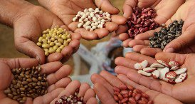 Hybrid Seeds Increase in Popularity in India, Says Ken Research Private in Its Report Published at MarketPublishers.com