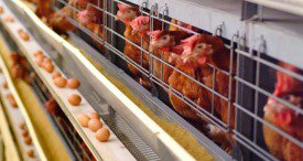 China Livestock & Poultry Breeding Equipment Market Shows Good Potential, States BOABC in Its New Report Available at Marketpublishers.com