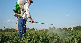 China Neonicotinoid Insecticides Market is One of the Biggest Markets Globally, Says WBISS in Its New Report Available at MarketPublishers.com