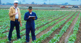 Farm Management Software Market to Reach USD 4.07 Bn by 2022, Says MarketsandMarkets in Its New Study Available at MarketPublishers.com