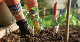 UK Gardening Sector Remains Relatively Resilient to Downturns, States Verdict Retail in Its Discounted Report Available at MarketPublishers.com