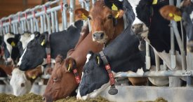 Livestock Monitoring Market to Hit USD 952 Mln Mark by 2022, Announces M&M in Its New Research Report Now Available at MarketPublishers.com