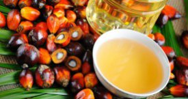 Global Palm Oil Market Gains Traction, According to Insightful Report by Koncept Analytics Available at MarketPublishers.com
