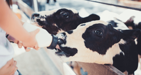 Global Milk Replacers Market to Reach USD 3.54 Bn by 2022, Predicts M&M in Its Topical Research Report Recently Uploaded at MarketPublishers.com