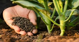Vietnam Fertilizer Market Analysed & Forecast by VIRAC in Topical Research Report Recently Published at MarketPublishers.com