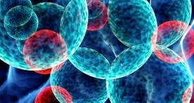 Myeloproliferative Neoplasms Therapy Landscape Canvassed by Black Swan Analysis in Its New Research Report Published at MarketPublishers.com