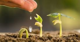 Europe Takes Lead in Global Plant Growth Regulators Market, States PBI in Its In-Demand Report Available at MarketPublishers.com