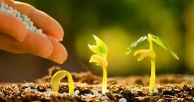 Major Facts to Know about Agrochemicals Market