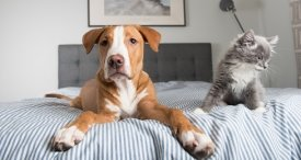 Pet Care Market: Top 3 Trends for 2018