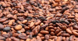 Top 5 Cocoa Beans Producing Countries in the World