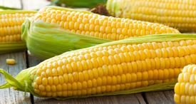 Global Corn Consumption to Outstrip Production for Second Year in a Row