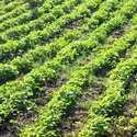 USA Organic Fertilizer Market is Relatively Open