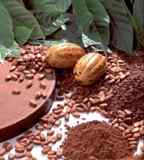 "The Cocoa and Chocolate Market in Columbia Is Considered to Be an ""Exciting"" One"